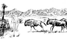 buffalo_safari