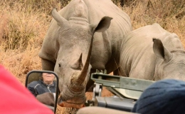 rhino_safari