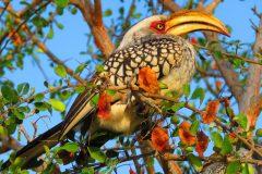 Makutsi Bird Life