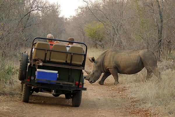 rhino_crossing