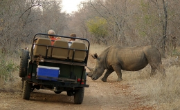 rhino_crossing