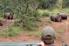 smith_rhinosafari