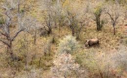rhino_heli2