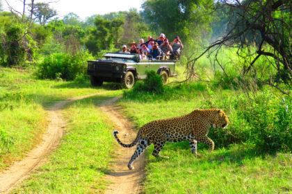 Makutsi Safari