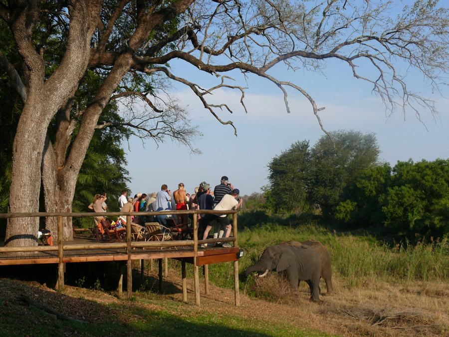 Elephants visiting Makutsi deck